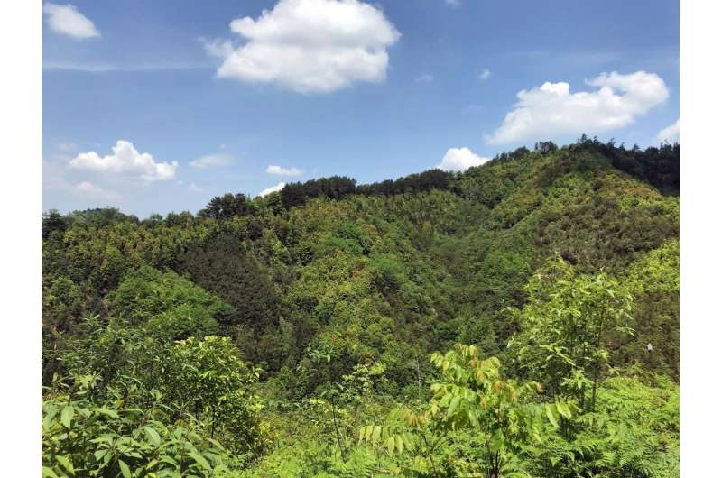 Directed species loss from species-rich forests strongly decreases productivity