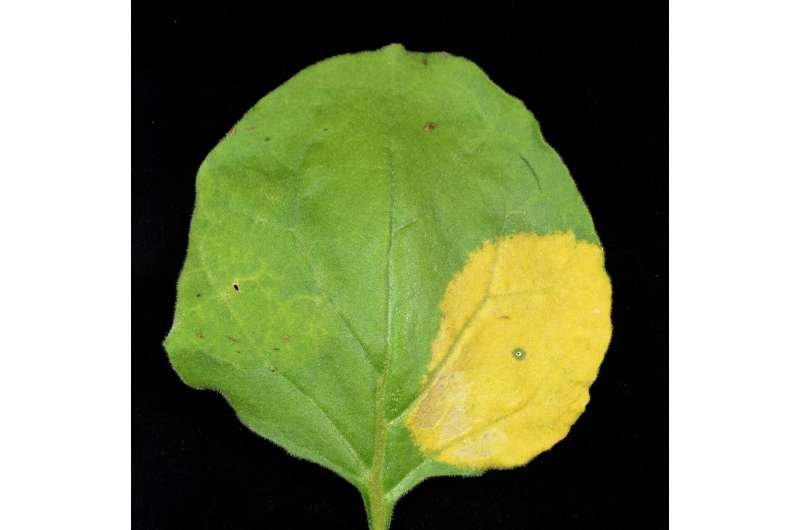 Discovered a new method of biofortification that transforms leaves into nutrient stores