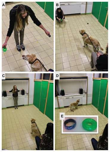 Dogs are sensitive to their owners' choice despite their own preference