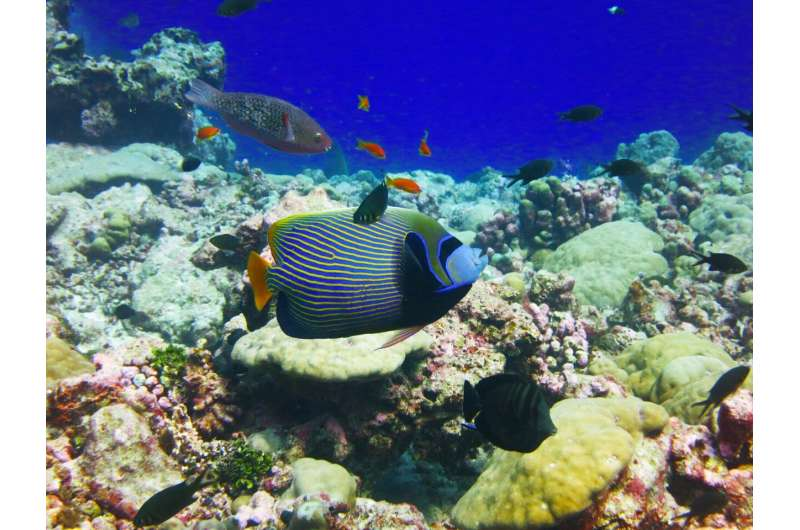 Even biodiverse coral reefs still vulnerable to climate change and invasive species