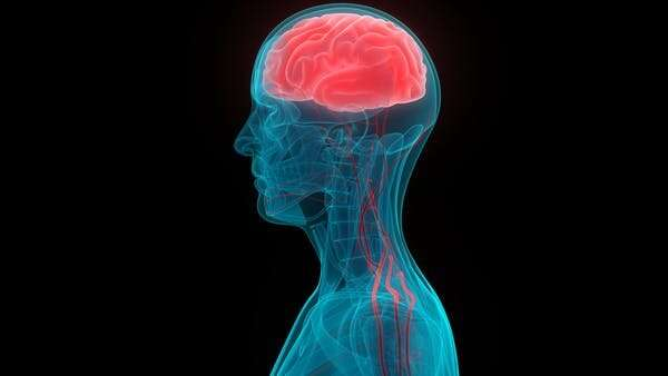 Exercise and the brain: here's three ways physical activity changes its very structure
