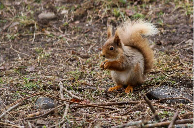 Forest loss escalates biodiversity change