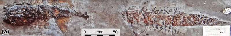 Fossil reveals evidence of 200-million-year-old 'squid' attack