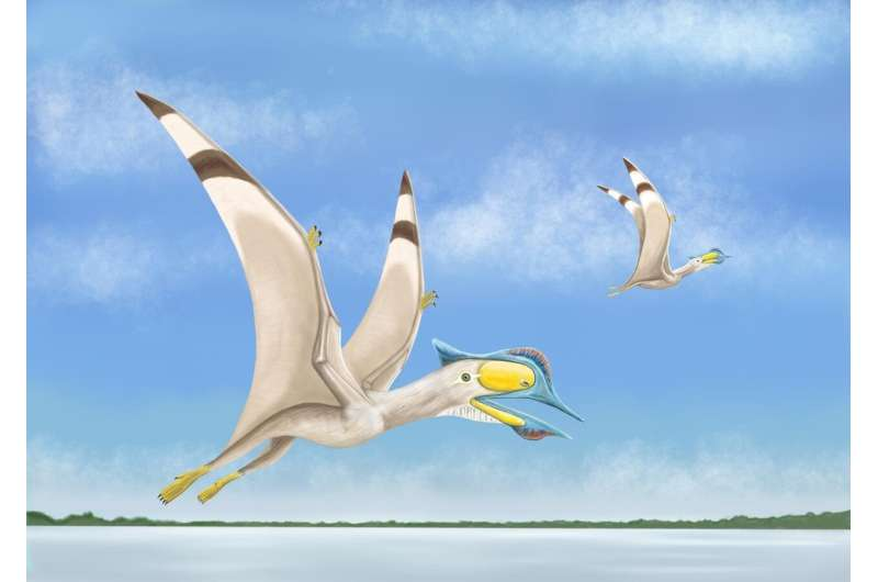 Fourth new pterosaur discovery in matter of weeks