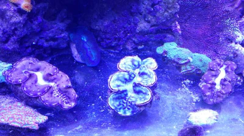 Giant clam shells: Unprecedented natural archives for paleoweather