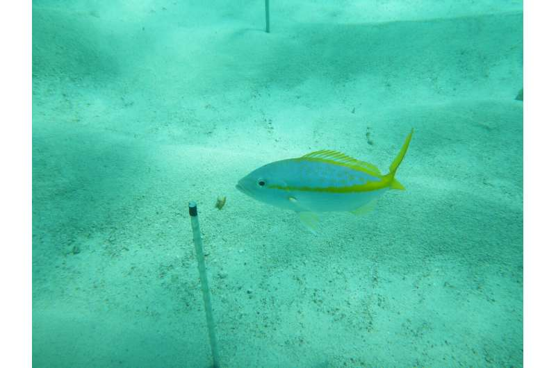 Global 'BiteMap' reveals how marine food webs may change with climate