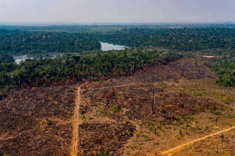 Handout picture released by the Communication Department of the State of Mato Grosso showing deforestation in the Amazon basin i