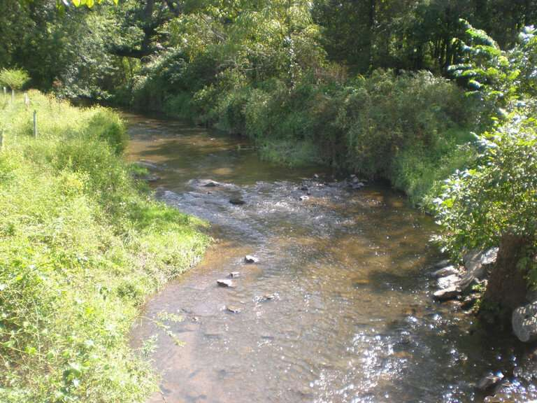 Harvesting vegetation on riparian buffers barely reduces water-quality benefits