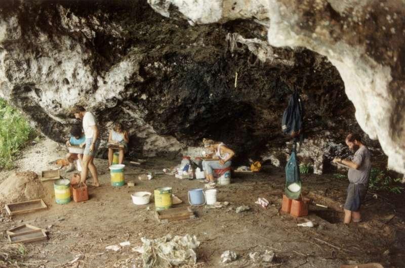 Henderson island fossils reveal new Polynesian sandpiper species