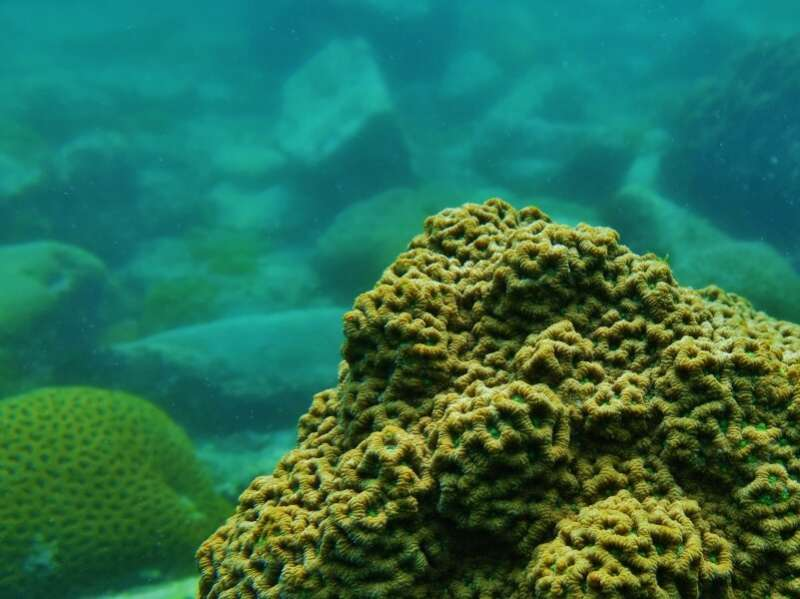 HKU study unlocks the secret of corals' tolerance to climate change: Their diet