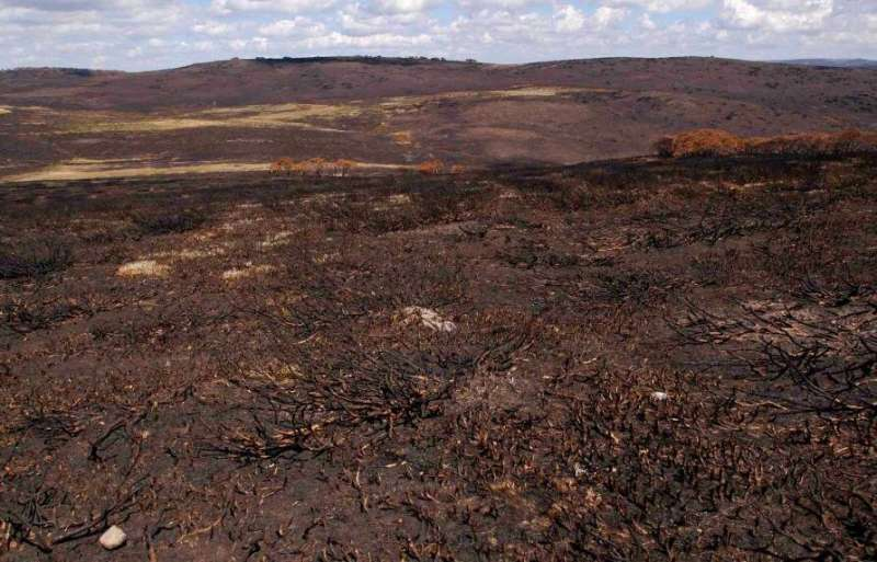 How do we protect our unique biodiversity from megafires?