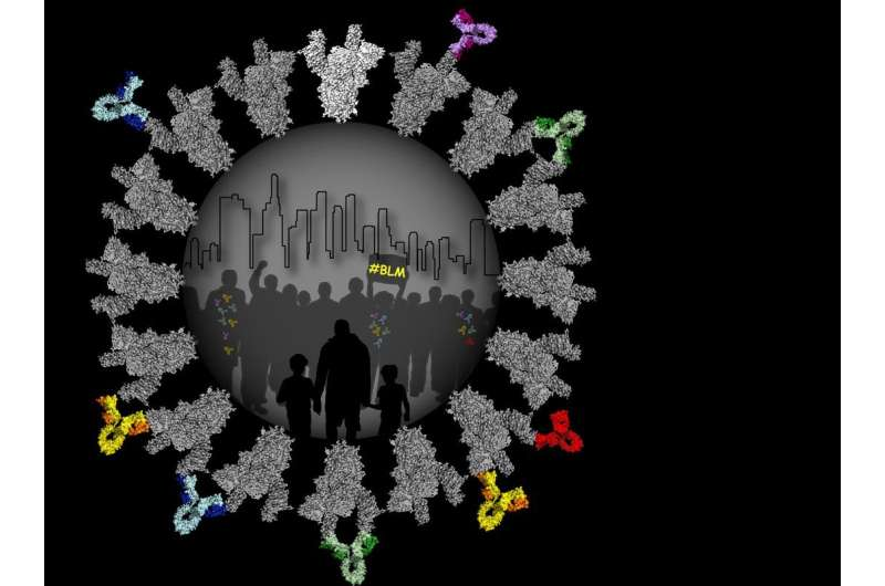 Images of antibodies as they neutralize the COVID-19 virus