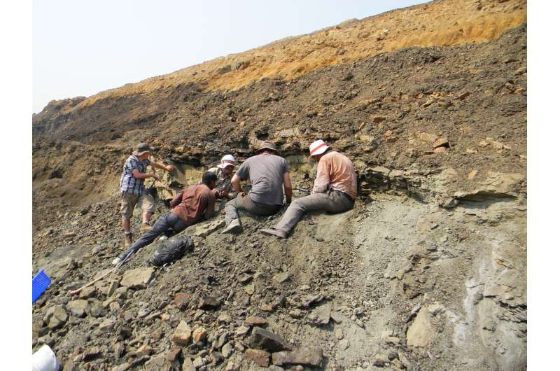 Indian fossils support new hypothesis for origin of hoofed mammals