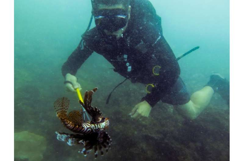 Invasive lionfish may be a selective predator