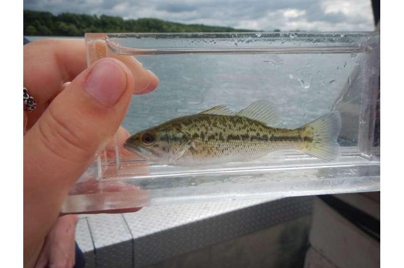 Is Niagara Falls a barrier against fish movement?