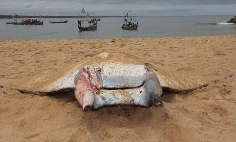 Ivory Coast creates first marine protected area