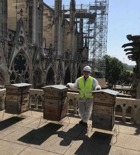 Lead released in Notre Dame Cathedral fire detected in Parisian honey