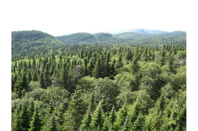 Leaf microbiomes are a neighborhood affair in northern forests