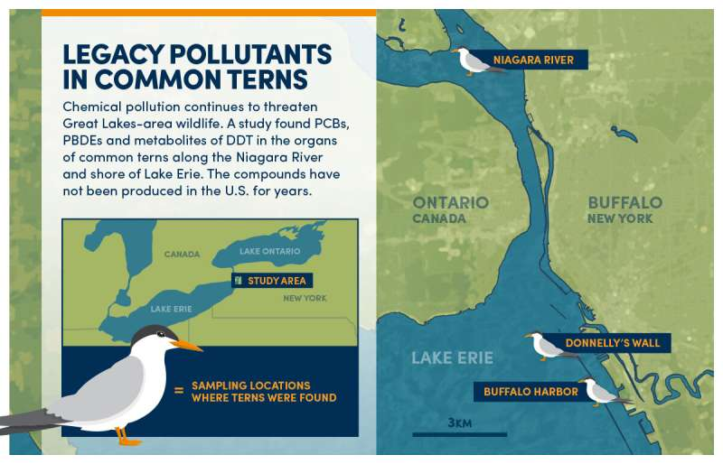 Legacy pollutants found in migratory terns in Great Lakes region