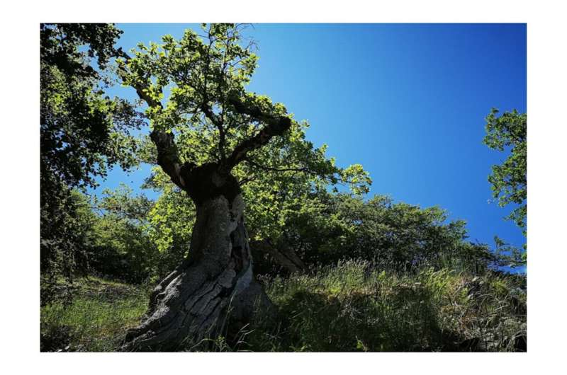 Longevity hotspots in a world of trees: from bioecological research to environmental protection