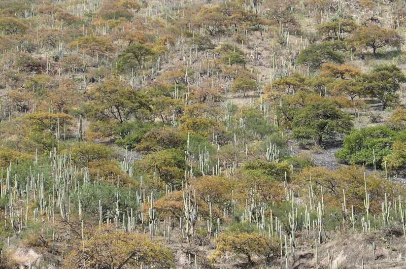 Look beyond rainforests to protect trees, scientists say