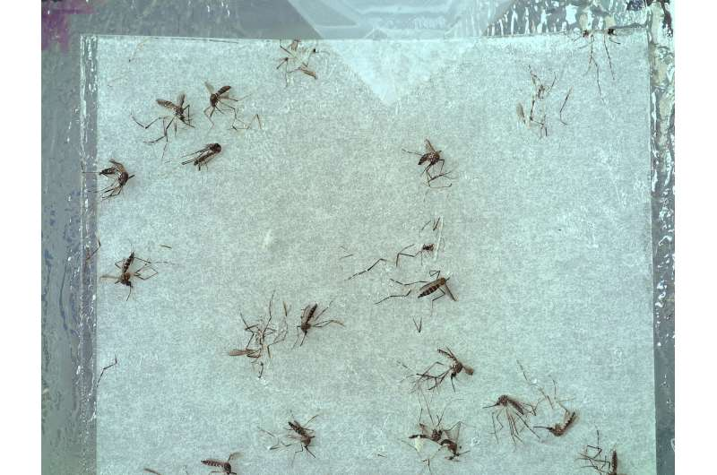 Low-cost imaging system poised to provide automatic mosquito tracking