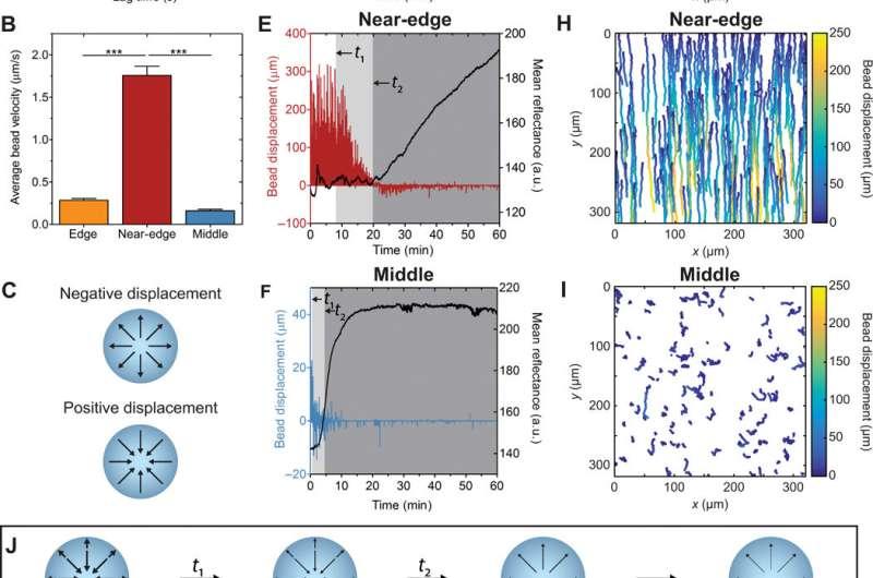 Marangoni flows drive the alignment of fibrillar cell-laden hydrogels