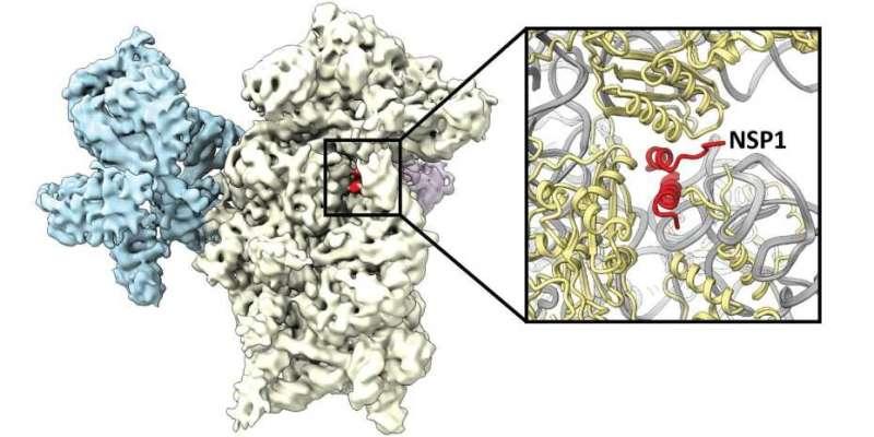 Mechanism discovered how the coronavirus hijacks the cell