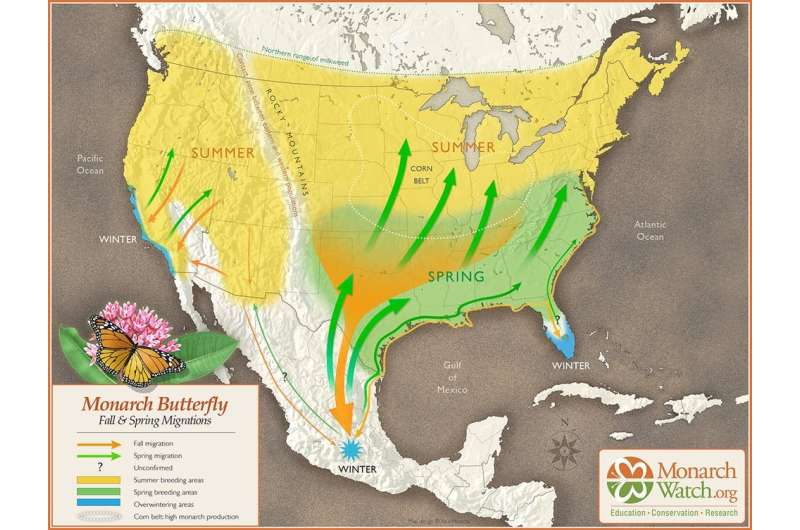 Monarch butterflies' spectacular migration is at risk—an ambitious new plan aims to save it