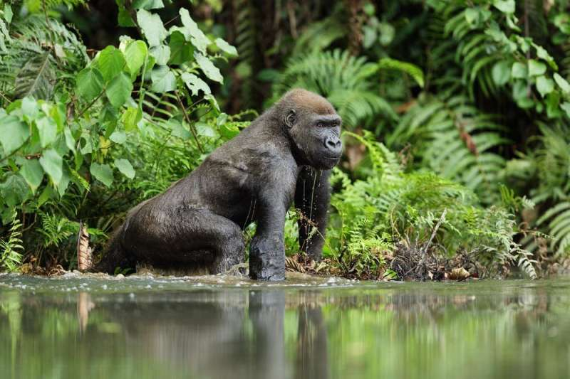 Most laws ignore human-wildlife conflict—this makes us vulnerable to pandemics