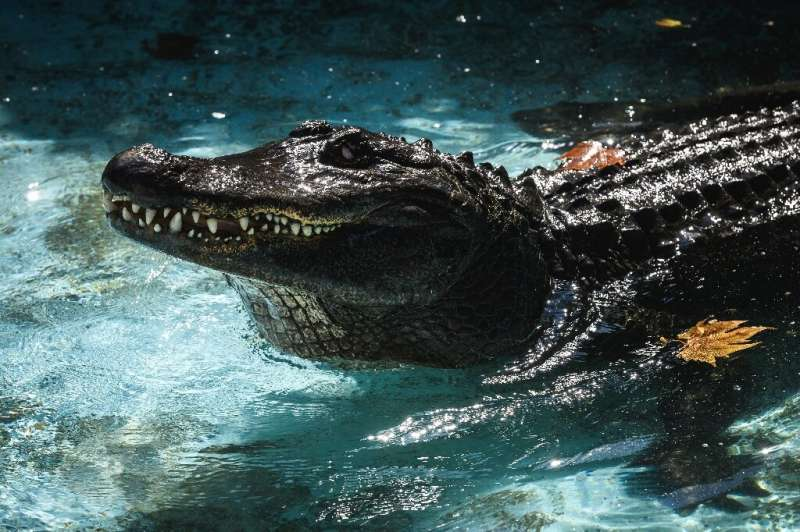 Muja has been at the zoo in Belgrade for 83 years, making him the world's oldest captive alligator