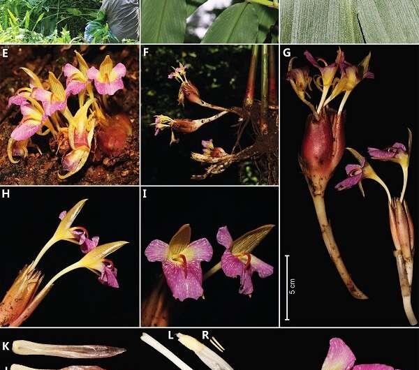 New ginger species found in Yunnan