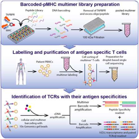 New high-throughput approach yields libraries of probes for immunological assays