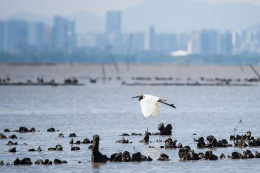 New research makes strong case for restoring Hong Kong's lost oyster reefs
