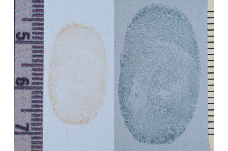 New study puts unusual forensic investigation technique to the test