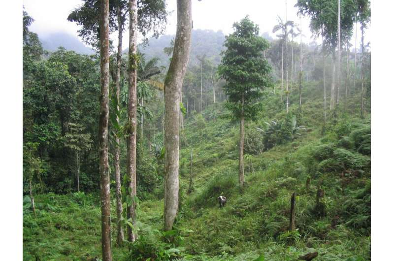 Nitrogen-fixing trees help tropical forests grow faster and store more carbon