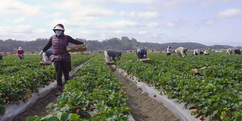 Pandemic has revealed our dependence on migrant workers