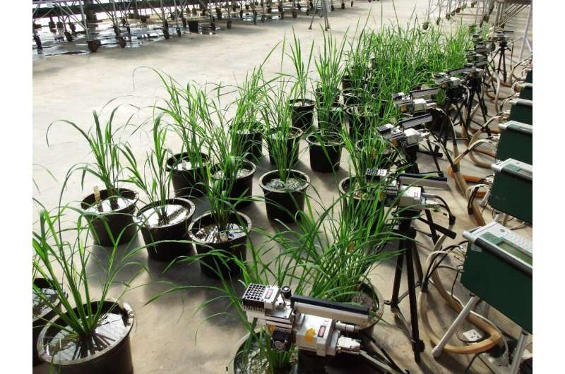 Photosynthesis varies greatly across rice cultivars--natural diversity could boost yields