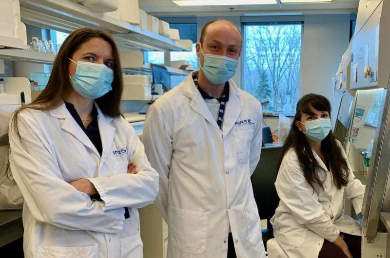 Potential treatment against antibiotic-resistant bacteria causing gonorrhea and meningitis