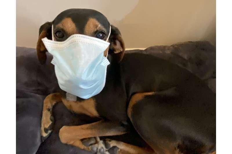 Puppies & burnout: The impact of the coronavirus on veterinarians