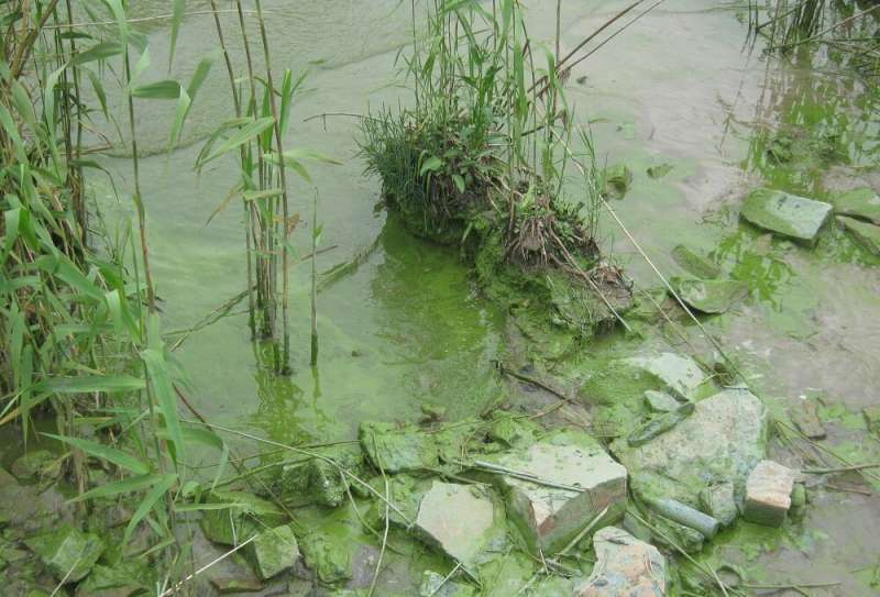 Purification of wastewater may lead to an imbalance between nitrogen and phosphorus