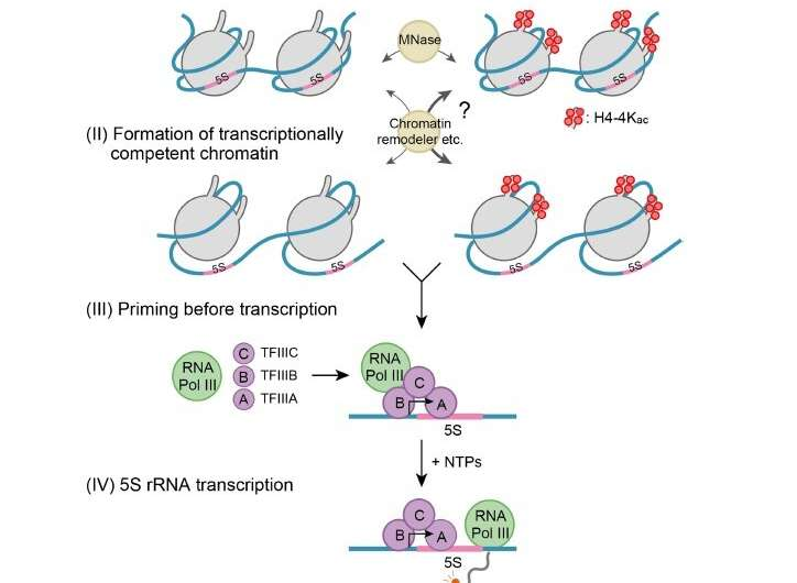 Quantitative approach on understanding how epigenetic switches control gene expression