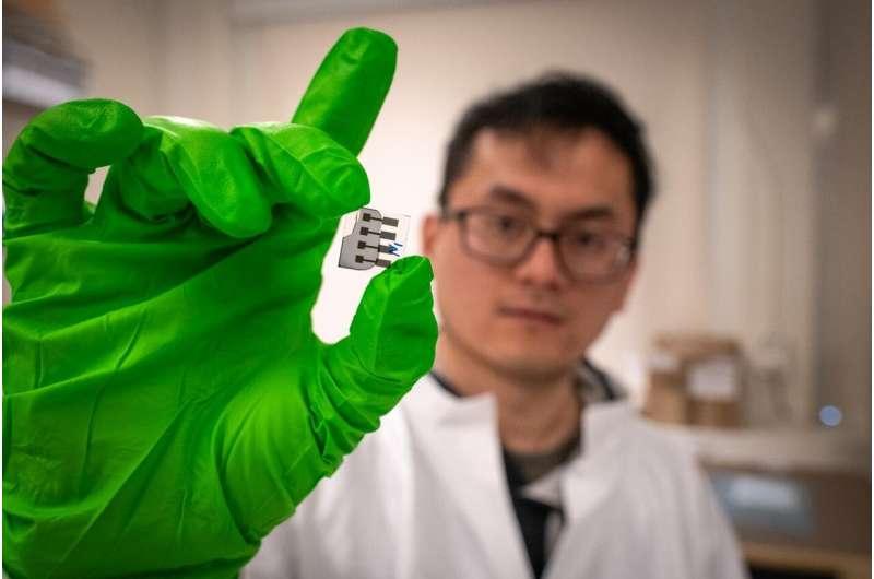Quantum phenomenon governs organic solar cells