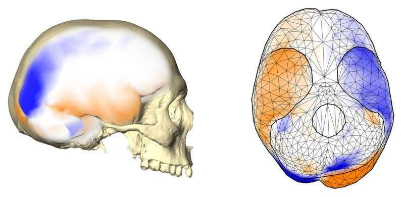 Researchers were not right about left brains