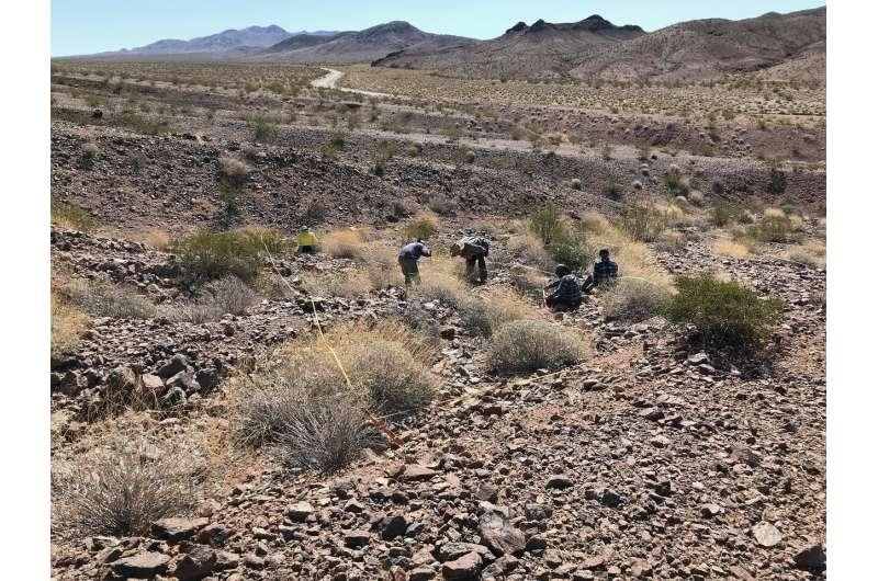 Rising temps put desert shrubs in high-efficiency mode