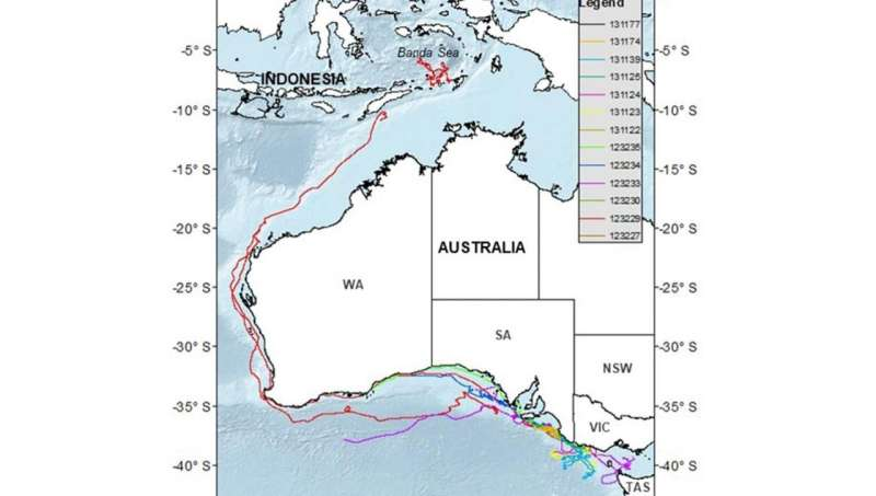 Satellite tracking supports whale survival