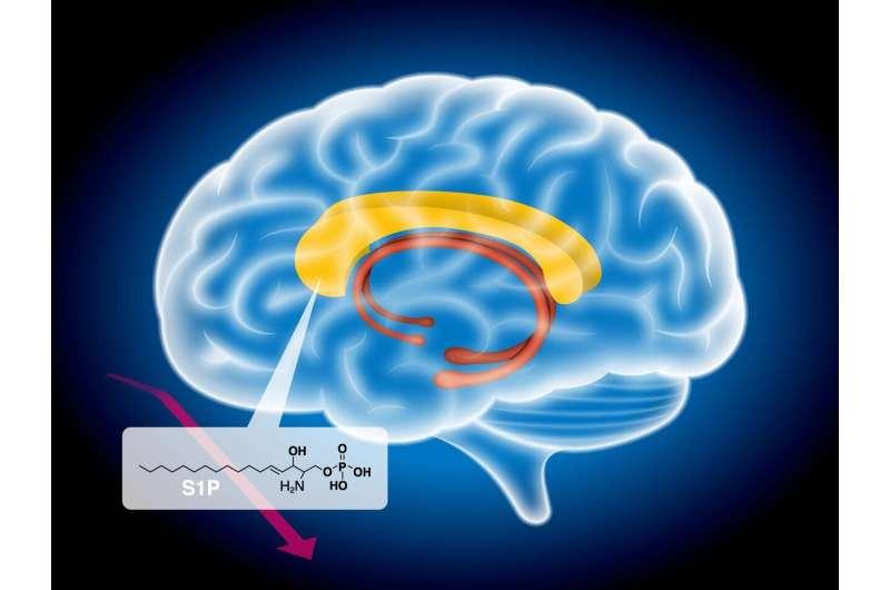 Schizophrenia related to abnormal fatty metabolism in the brain