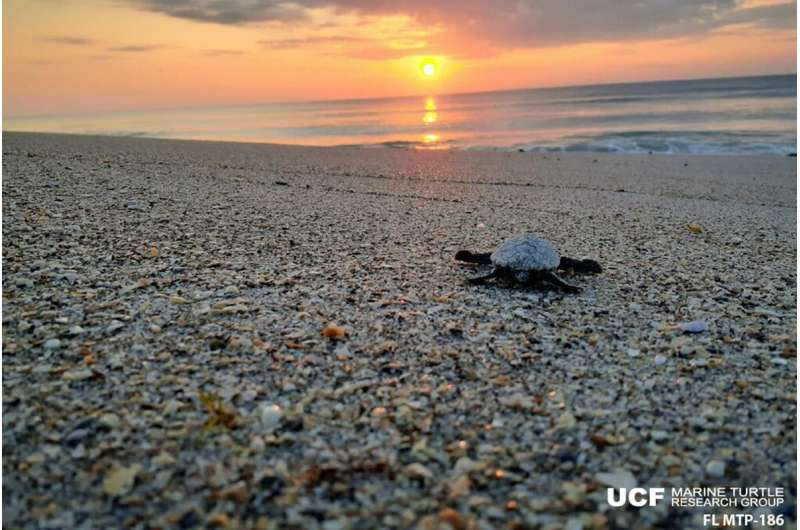 Sea turtle nesting season winding down in Florida, some numbers are up and it's unexpected