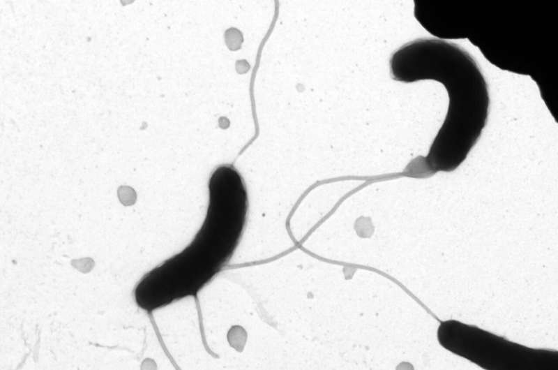 Small molecules control bacterial resistance to antibiotics