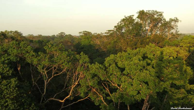 Small trees offer hope for rainforests